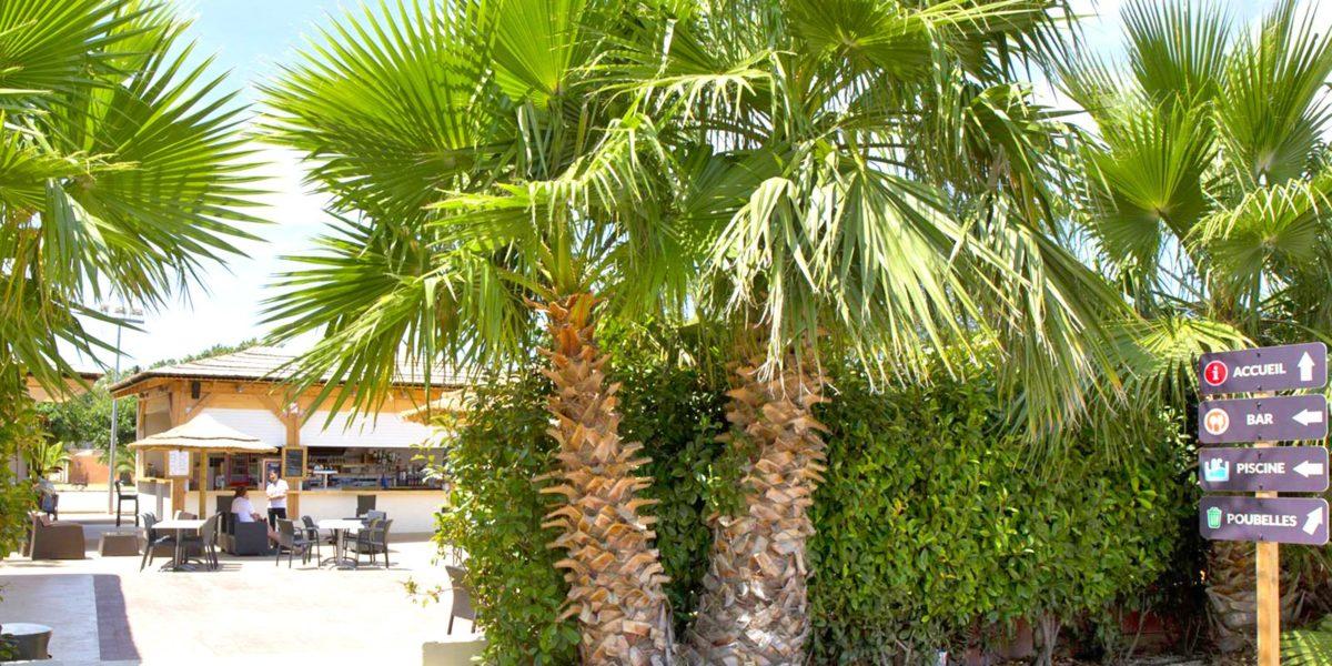 Séjours tout confort à Saint-Cyprien (Collioure, Elne…) au camping Le Florida